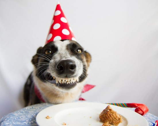 dog-birthday-cake2