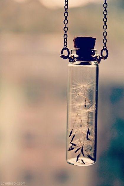 31299-dandelion-wishes